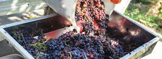 métiers viticulture